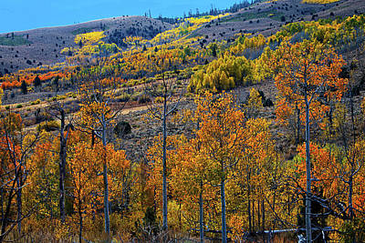Photograph - Aspen Cascades In The Sierra by Lynn Bauer