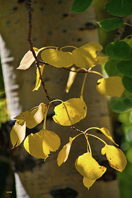 Photograph - Aspen Closeup by Dana Sohr