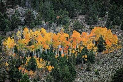 Photograph - Aspen Color by Juli Ellen