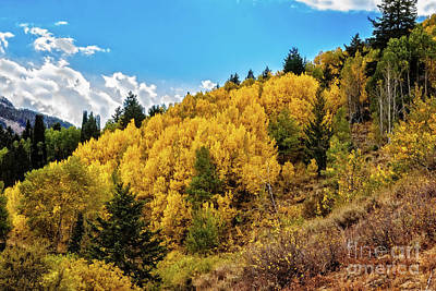 Photograph - Aspen Color by Robert Bales