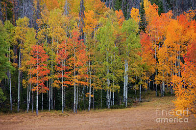 Photograph - Aspen Color by Timothy Johnson