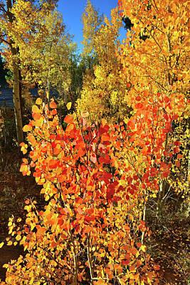 Photograph - Aspen Colors In Dillon Colorado by Ray Mathis