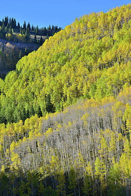 Photograph - Aspen Covered Hillside Above Highway 550 by Ray Mathis
