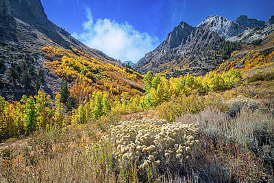 Photograph - Aspen Days At Mcgee Creek by Lynn Bauer