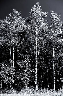 Photograph - Aspen Drama by Shelly Gunderson