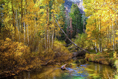 Photograph - Aspen Dream by Lynn Bauer