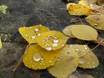 Drippy Photograph - Aspen Drops by Paul Westcott