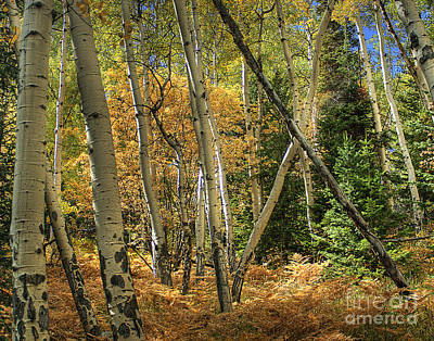 Photograph - Aspen Ecosystem by Pete Hellmann