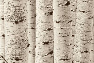Photograph - Aspen Eyes by Scott Wheeler