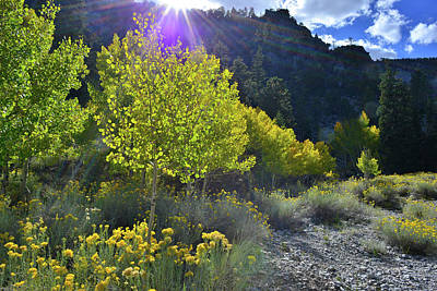 Photograph - Aspen Fall Color At Mt. Charleston by Ray Mathis
