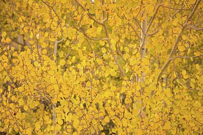 Photograph - Aspen Fall Colors In Utah by Kunal Mehra
