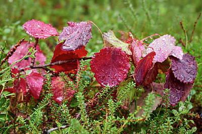 Photograph - Aspen Fall Colors by Jouko Lehto