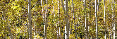 Landscape Photograph - Aspen Fall Panoramic by Brett Pelletier