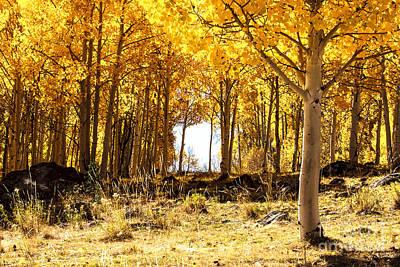 Photograph - Aspen Forest 2 by Ben Graham