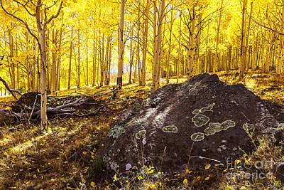 Photograph - Aspen Forest by Ben Graham