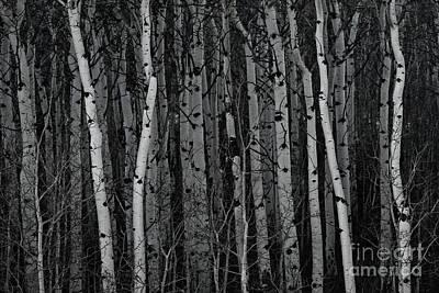 Aspen Forest Art Print by Brad Allen Fine Art
