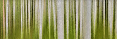 Photograph - Aspen Forest by Ken Smith
