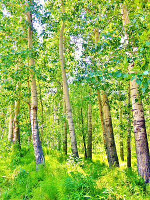 Photograph - Aspen Forest by Marilyn Diaz