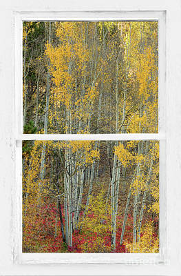 Photograph - Aspen Forest Red Wilderness Floor Rustic Window View by James BO Insogna
