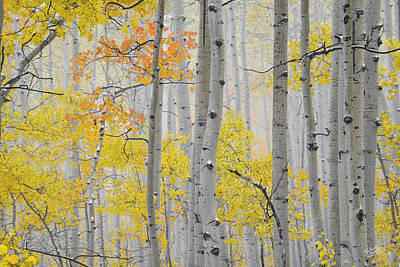 Bright Colors Photograph - Aspen Forest Texture by Leland D Howard