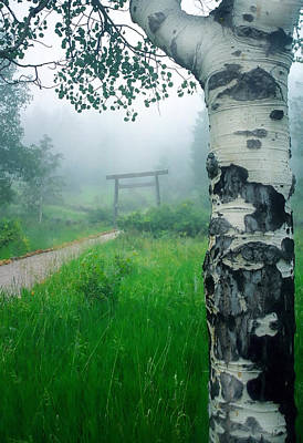 Tori Photograph - Aspen Gate Mist by Karl Manteuffel