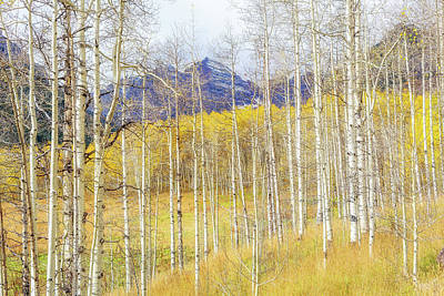 Photograph - Aspen Glow by Eric Glaser