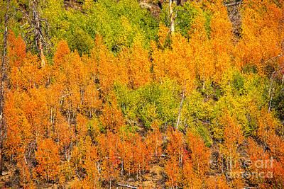 Photograph - Aspen Glow Idaho Landscapes By Kaylyn Franks by Omaste Witkowski