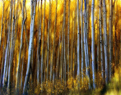 Wall Art - Photograph - Aspen Glow by Susie Gillatt