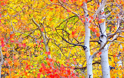 Photograph - Aspen Gold And Orange by Marilyn Diaz