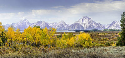 Aspen Gold In The Tetons Art Print