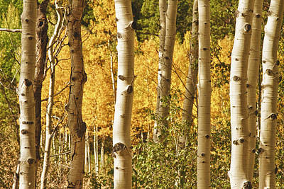 Boardroom Photograph - Aspen Gold by James BO  Insogna