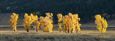 Photograph - Aspen Gold by Mike Fitzgerald