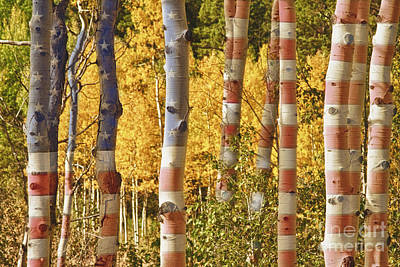 Forest Photograph - Aspen Gold Red White And Blue by James BO  Insogna