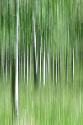 Photograph - Aspen Grass Dance by Deborah Hughes