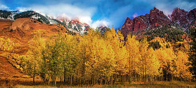 Photograph - Aspen Grove by Andrew Soundarajan
