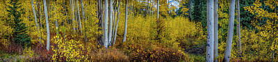 Photograph - Aspen Grove Colorado Dsc06733 by Greg Kluempers