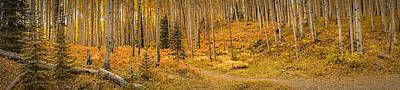 Photograph - Aspen Grove Colorado Panoramic Dsc07345 by Greg Kluempers