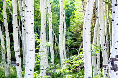White House Mixed Media - Aspen Grove by David Millenheft