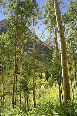 Photograph - Aspen Grove by Endre Balogh