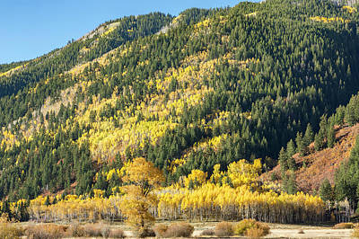 Photograph - Aspen Grove In Aspen by Jemmy Archer