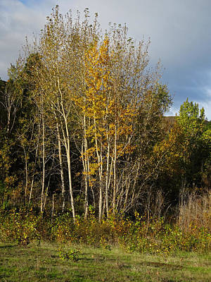 Photograph - Aspen Grove by Jacqueline  DiAnne Wasson