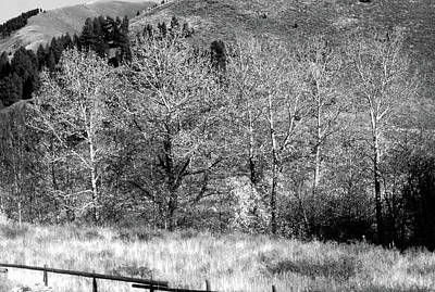 Photograph - Aspen Grove by John Schneider