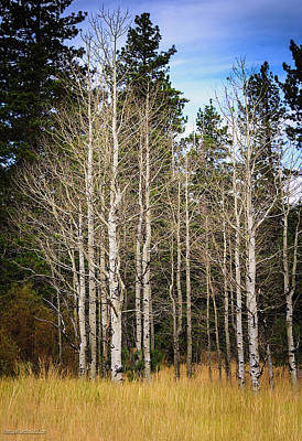 Tahoe Photograph - Aspen Grove Lake Tahoe by LeeAnn McLaneGoetz McLaneGoetzStudioLLCcom