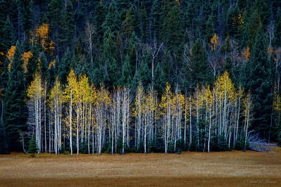 Photograph - Aspen Grove Late Fall by David Arment