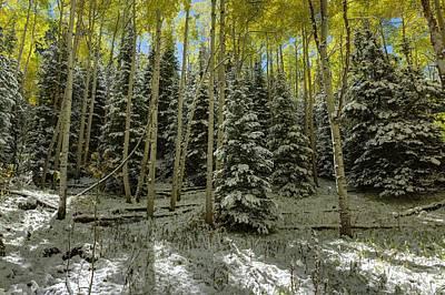 Photograph - Aspen Grove by OLena Art Brand