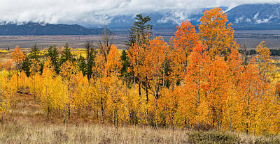 Photograph - Aspen Grove On Shadow Mountain by Kathleen Bishop
