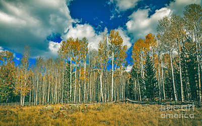 Photograph - Aspen Grove by Robert Bales