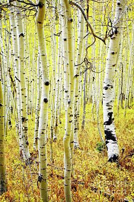 Photograph - Aspen Grove by Scott Kemper
