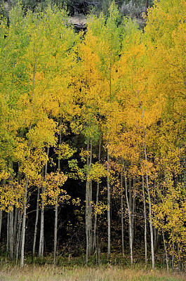 Photograph - Aspen Haven  by Ron Cline
