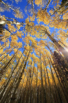 Photograph - Aspen Hues by Tom Kelly